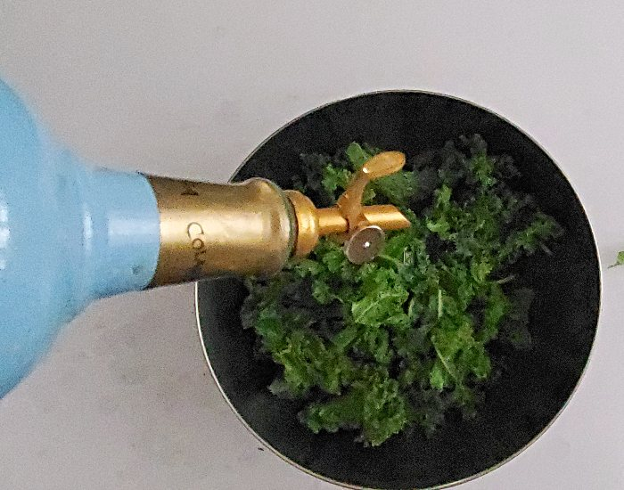 Add oil to kale leaves