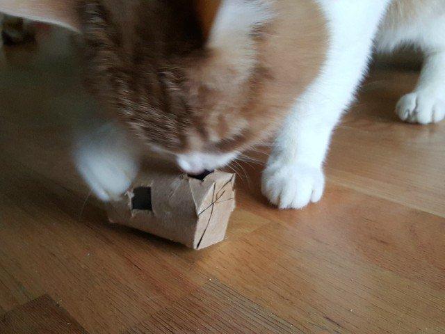 Diy Cat Treat Dispenser Honest And Truly