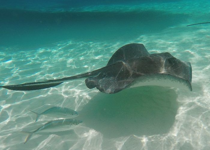 The Best Way To Spend A Day In Grand Cayman - Honest And Truly!